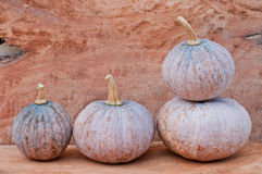Pumpkins. Rustic autumn still life with mini pumpkins on old wood in background. Macro with shallow dof Royalty Free Stock Photography