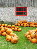 Pumpkins with rustic barn and flowers Stock Photography