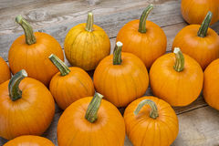 Pumpkins on a rustic wood Stock Images