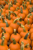 Pumpkins for Sale. Vertical image of a group of small pumpkins Royalty Free Stock Photo