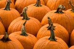 Pumpkins for Sale. Closeup of pumpkins waiting to be sold Royalty Free Stock Images
