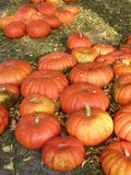 Pumpkins for sale Royalty Free Stock Photography