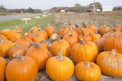 Pumpkins for sale royalty free stock images
