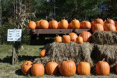 Pumpkins for sale Stock Photography