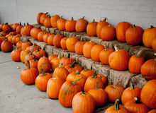 Pumpkins For Sale. At a Grocery Store Royalty Free Stock Photography