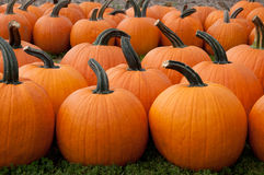 Pumpkins For Sale. Pumpkins are set out for sale Royalty Free Stock Images