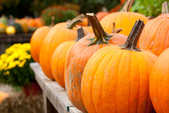Pumpkins for sale. A table full of pumpkins for sale at the market at harvest time in autumn Royalty Free Stock Images