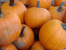 Pumpkins For Sale! Stock Images