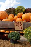 Pumpkins for Sale. A beautiful display of pumpkins and mums for sale at a local farm in fall Stock Photography