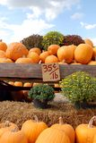Pumpkins for Sale. A beautiful display of pumpkins and mums for sale at a local farm in fall Royalty Free Stock Photo