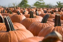 Pumpkins for sale  7 Royalty Free Stock Images