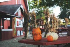 Pumpkins for sale. American farm and barns at autumn in Illinois. Halloween and autumn background Royalty Free Stock Images
