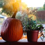 Pumpkins for sale. American farm and barns at autumn in Illinois. Halloween and autumn background Royalty Free Stock Photography