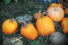 Pumpkins for sale. American farm and barns at autumn in Illinois. Halloween and autumn background Royalty Free Stock Image