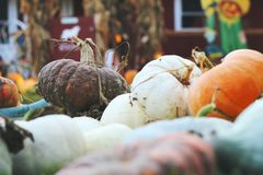 Pumpkins for sale. American farm and barns at autumn in Illinois. Royalty Free Stock Photo