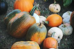 Pumpkins for sale. American farm and barns at autumn in Illinois. Halloween and autumn background Stock Photos
