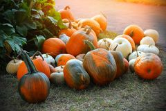 Pumpkins for sale. American farm and barns at autumn in Illinois. Halloween and autumn background Royalty Free Stock Photo