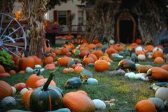Pumpkins for sale. American farm and barns at autumn in Illinois. Halloween and autumn background Stock Image