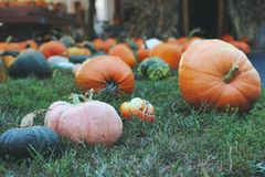 Pumpkins for sale. American farm and barns at autumn in Illinois. Halloween and autumn background Stock Photography