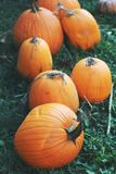 Pumpkins for sale. American farm and barns at autumn in Illinois. Royalty Free Stock Images