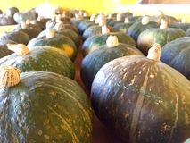 Pumpkins for sale. Autumn day, lots of pumpkins for sale Stock Image