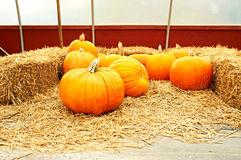 Pumpkins for sale. On autumn market Royalty Free Stock Images