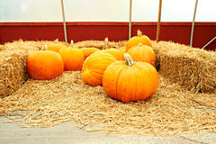 Pumpkins for sale. On autumn market Royalty Free Stock Photography