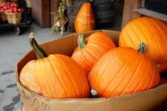 Pumpkins for sale. On autumn market Stock Photos