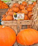 Pumpkins for sale. Autumn pumpkins  of various sizes and colors  on wood pallets with dried corn stalks for sale at a fall farmers market Royalty Free Stock Photography