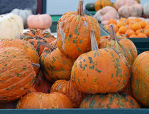 Pumpkins For Sale. At the Farmers Market Stock Images