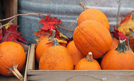 Pumpkins For Sale. At the Farmers Market Royalty Free Stock Images