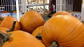 Pumpkins for sale stock video footage