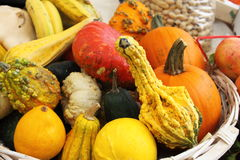 Pumpkins for sale. In a greengrocery Stock Photos