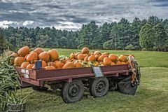 Pumpkins for sale before Halloween Stock Image