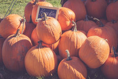 Pumpkins for sale at Harvest Festival in Vernon New Jersey Stock Photo