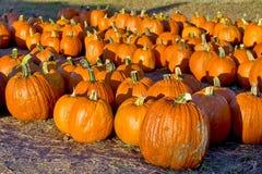 Pumpkins for sale Stock Photo