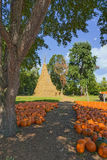 Pumpkins for Sale. Large Corn Stalk Teepee and Pumpkins For Sale at Farm Market Royalty Free Stock Image