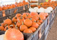 Pumpkins for sale. Large wooden crates of pumpkins for sale at a fall market before Halloween Stock Photos