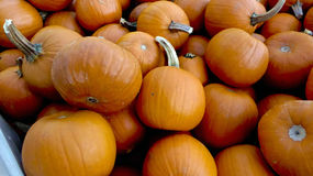 Pumpkins for cooking  Stock Image