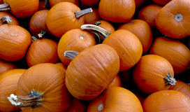 Pumpkins for cooking Royalty Free Stock Photo