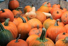 Pumpkins for sale at a Pacific Northwest farmers market Stock Photos