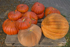 Pumpkins for sale Royalty Free Stock Photo