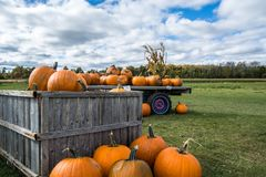 Pumpkins For Sale. Autumn Fall Decoration on the farm wagon Royalty Free Stock Photo