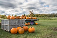 Pumpkins For Sale. Autumn Fall Decoration on the farm wagon Stock Photos
