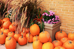 Pumpkins for sale Stock Photos