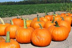 Pumpkins for sale at a rural roadside stand Royalty Free Stock Images