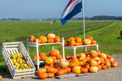 Pumpkins for sale on the side of the road. Flevoland, the Netherlands - October 2, 2011: pumpkins for sale in the countryside Stock Photography