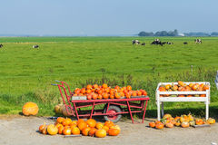 Pumpkins for sale on the side of the road. Flevoland, the Netherlands - October 2, 2011: pumpkins for sale in the countryside Royalty Free Stock Image