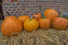Pumpkins for sale Stock Photos