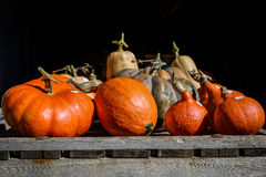 The pumpkins Royalty Free Stock Photography